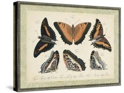 Bookplate Butterflies Trio I--Stretched Canvas Print