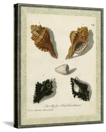 Bookplate Shells I--Stretched Canvas Print