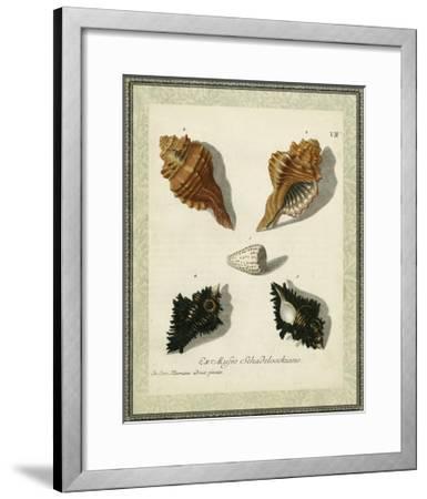 Bookplate Shells I--Framed Art Print