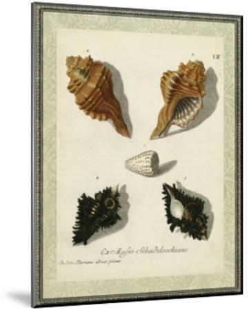 Bookplate Shells I--Mounted Art Print