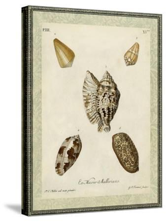 Bookplate Shells II--Stretched Canvas Print