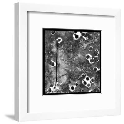 Black Ice II-Renee W^ Stramel-Framed Art Print