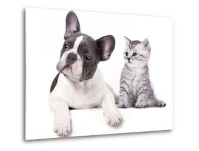Cat and Dog, British Kitten and  French Bulldog Puppy-Lilun-Metal Print