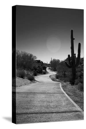 Cart Path on Desert Golf Course Arizona--Stretched Canvas Print
