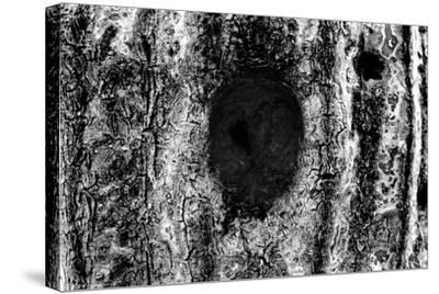 Tree Trunk Hole--Stretched Canvas Print
