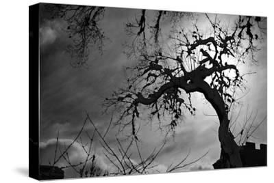 Spooky Tree--Stretched Canvas Print