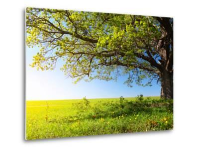 Spring Tree with Fresh Green Leaves on a Blooming Meadow-Dudarev Mikhail-Metal Print