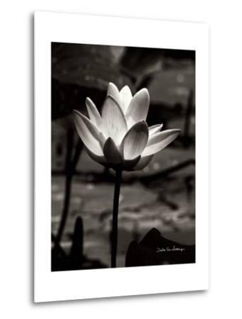 Lotus Flower VII-Debra Van Swearingen-Metal Print