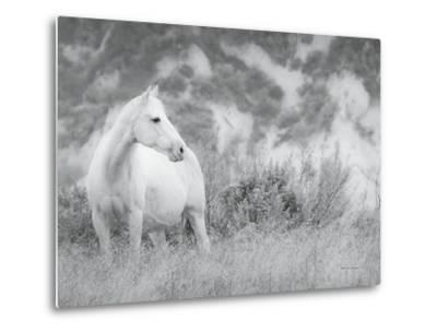 Misty Mare Crop-Lisa Cueman-Metal Print