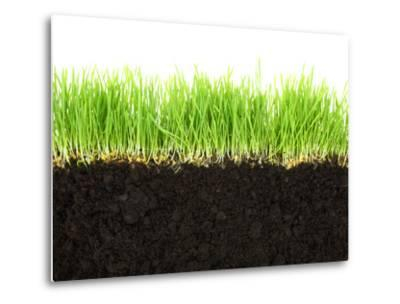 Cross-Section of Soil and Grass Isolated on White Background-viperagp-Metal Print