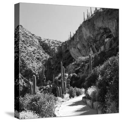Cliff Dwellings of Tonto National Monument, Arizona,USA-Anna Miller-Stretched Canvas Print