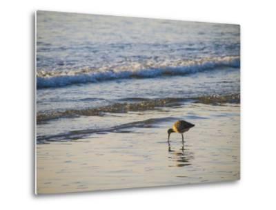 Coastal Bird, Morro Bay Coast-Anna Miller-Metal Print