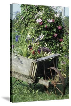 Vintage Wheelbarrow with Flowers--Stretched Canvas Print