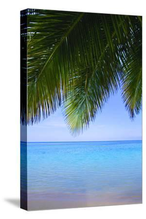 Palm Tree--Stretched Canvas Print