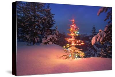 Christmas Tree in Snow with Lights--Stretched Canvas Print