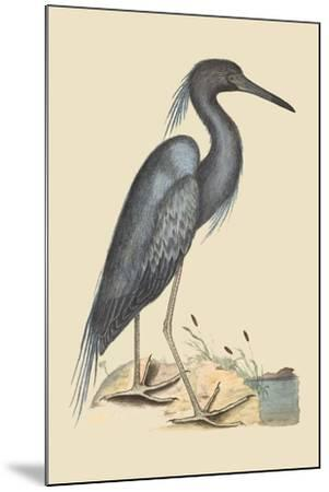 Blue Heron-Mark Catesby-Mounted Art Print