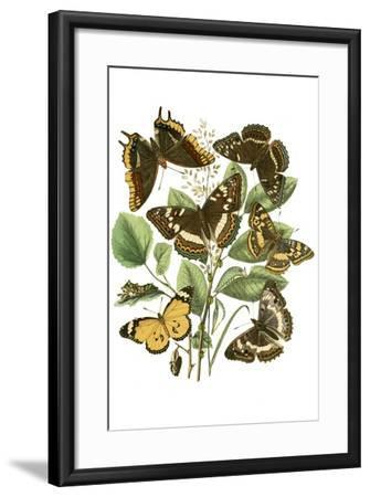 Cat Versus Goldfish-Th?hile Alexandre Steinlen-Framed Art Print