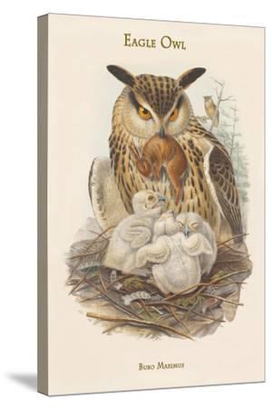 Bubo Maximus - Eagle Owl-John Gould-Stretched Canvas Print