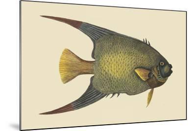 Angel Fish-Mark Catesby-Mounted Art Print