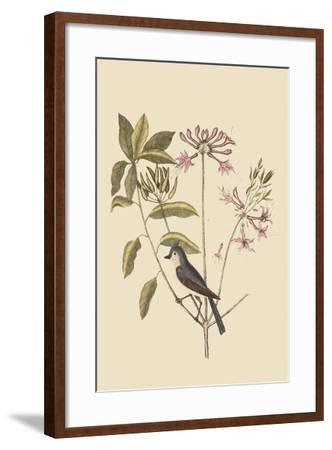 Crested Titmous-Mark Catesby-Framed Art Print