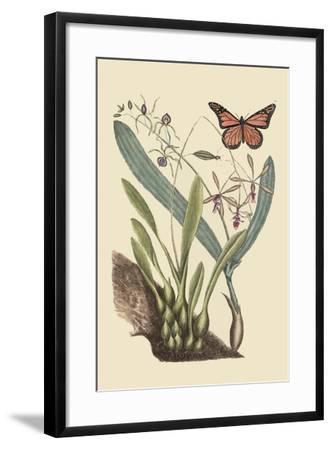 Monarch Butterfly-Mark Catesby-Framed Art Print