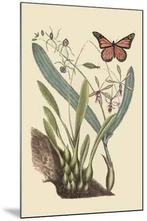 Monarch Butterfly-Mark Catesby-Mounted Art Print