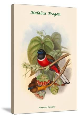 Harpactes Fasicatus-John Gould-Stretched Canvas Print