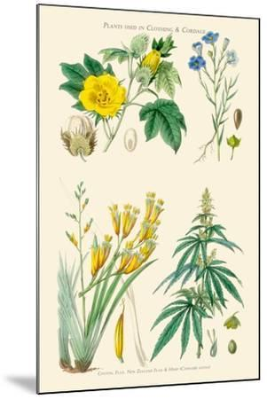 Plants Used in Clothing and Cordage. Cotton, Flax, New Zealand Flax, Cannabis-William Rhind-Mounted Art Print