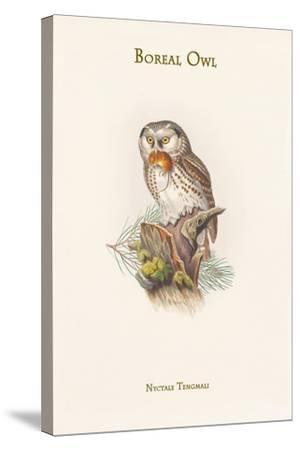 Nyctale Tengmali - Boreal Owl-John Gould-Stretched Canvas Print