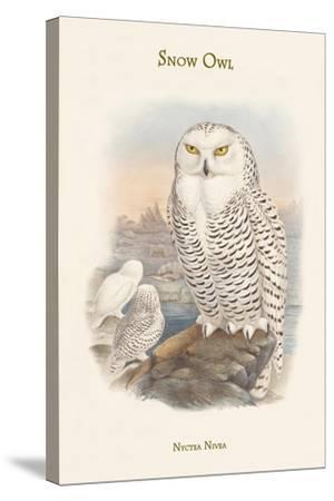Nyctea Nivea - Snow Owl-John Gould-Stretched Canvas Print