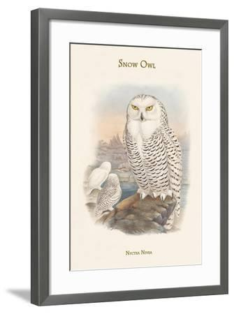 Nyctea Nivea - Snow Owl-John Gould-Framed Art Print