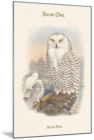 Nyctea Nivea - Snow Owl-John Gould-Mounted Art Print