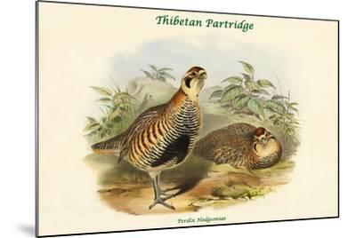 Perdix Hodgsoniae - Thibetan Partridge-John Gould-Mounted Art Print