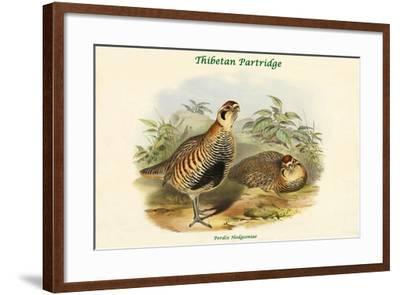 Perdix Hodgsoniae - Thibetan Partridge-John Gould-Framed Art Print