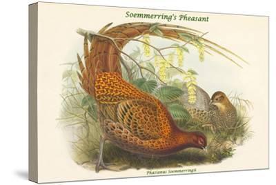 Phasianus Soemmerringii - Soemmerring's Pheasant-John Gould-Stretched Canvas Print