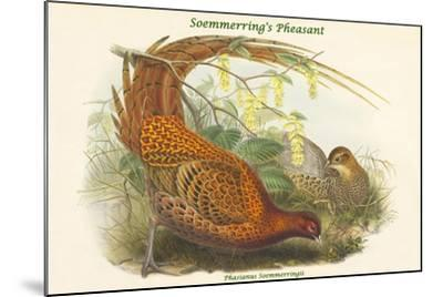 Phasianus Soemmerringii - Soemmerring's Pheasant-John Gould-Mounted Art Print