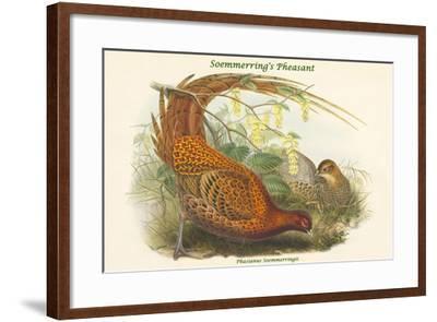 Phasianus Soemmerringii - Soemmerring's Pheasant-John Gould-Framed Art Print