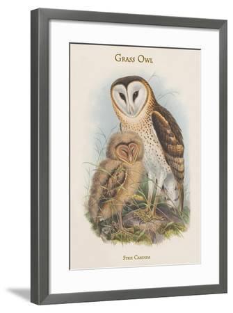 Strix Candida - Grass Owl-John Gould-Framed Art Print