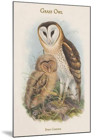 Strix Candida - Grass Owl-John Gould-Mounted Art Print