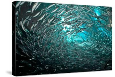 Fishes-Albert Lin-Stretched Canvas Print