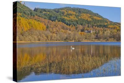 Autumn Colours in the Trossachs, Scotland-Dennis Barnes-Stretched Canvas Print