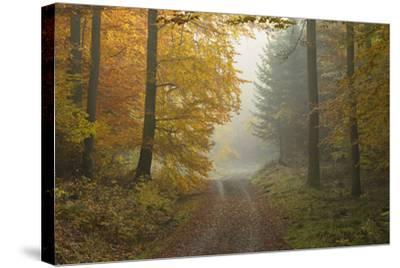 Path through Beech Forest in Autumn, Spessart, Bavaria, Germany-Michael Breuer-Stretched Canvas Print