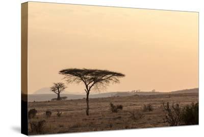 Acacia and Baobab Trees-Claudia Uribe-Stretched Canvas Print