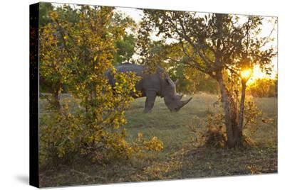 Rhinoceros in the Mosi-O-Tunya National Park-Maremagnum-Stretched Canvas Print