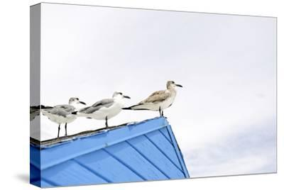 Seagulls on Roof of Kiosk-Axel Schmies-Stretched Canvas Print
