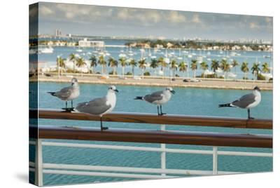 Sea Gulls on Railing of Cruise Ship-Juan Silva-Stretched Canvas Print