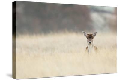 Hello!-MarkBridger-Stretched Canvas Print