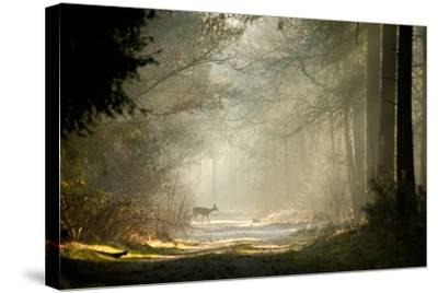 Deer-dewollewei-Stretched Canvas Print