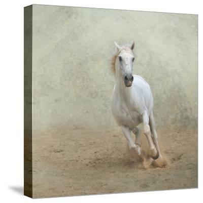 White Lusitano Horse Galloping-Christiana Stawski-Stretched Canvas Print