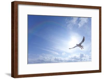 Seagull-ICHIRO-Framed Premium Photographic Print